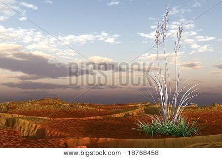 dry grass in desert