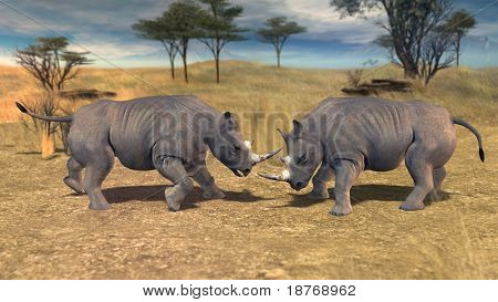 rhinoceros fighting in savannah