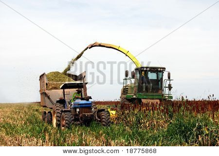 Sorghum harvesting in Brazil, combine harvester emptying grain in a trailer