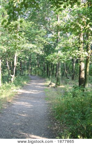 Foot Path In The Forrest