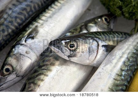 Mackerel on ice for sale at a fish market.