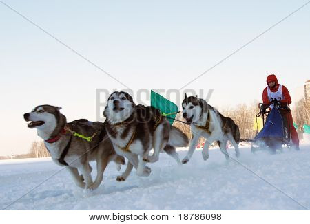 RUSSIA, MOSCOW - FEBRUARY 19: Participants compete in arrival