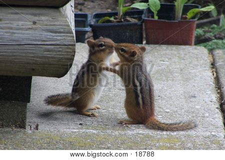 Dancing Chipmunks