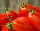 stock photo of plum tomato  - freshly picked tomatoes - JPG