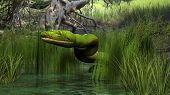 picture of green tree python  - green python in jungle - JPG