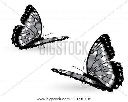 Mariposas plata