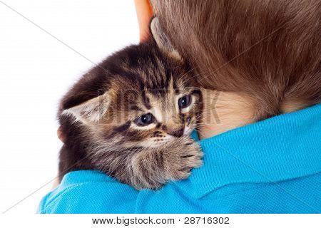 Gray kitten on boy's shoulder