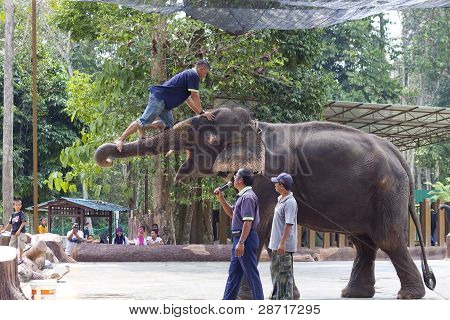 Elephant shows