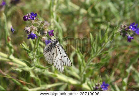 Beautiful Butterfly In Vegetation