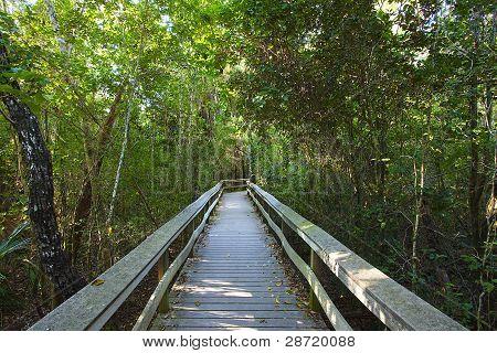 Tropical hardwood Hammock