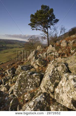 Single Tree From Granite Rocks