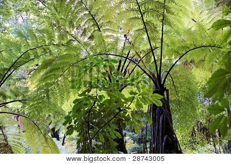 Fern Trees In The Abel Tasman National Park