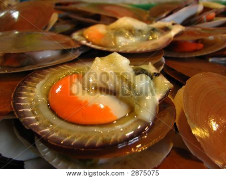 Fresh Open Scallops