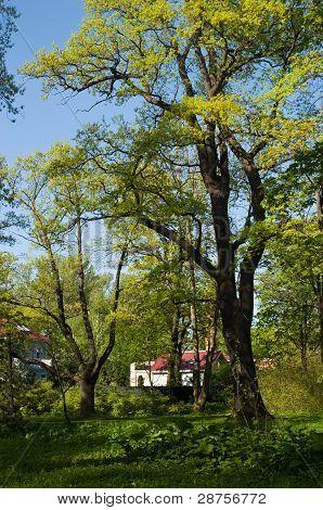 Kamenny Island In Spring