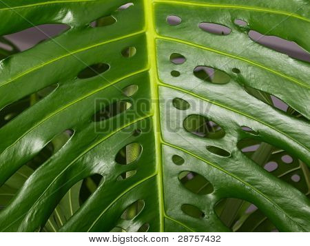 Leaf Of The Plant