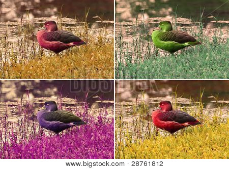 sleeping Duck k-art
