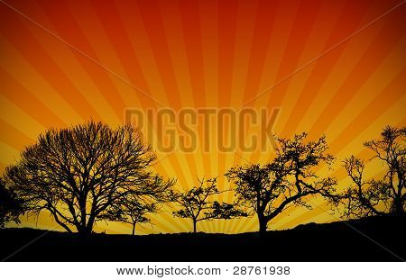 Sunset Light Rays Nature Background