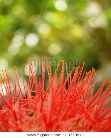 flower over blur background