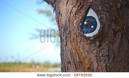 Blue Eyed Tree Trunk at Fort De Soto State Park