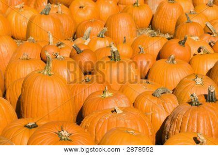 Autumn Pumpkins.