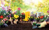 Gardening - Equipment For Gardener And Flower Pots In Sunny Garden poster