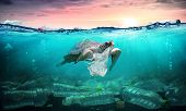Plastic Pollution In Ocean - Turtle Eat Plastic Bag - Environmental Problem poster