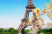 Famous Eiffel Tower Details Close Up With Spring Tree Bloom, Paris, France poster