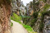 Hiking trail (Cares Trail or Ruta del Cares) along river Cares in cloudy spring  day( near  Cain), P poster