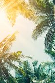 Copy Space Of Tropical Palm Tree With Sun Light On Sky Background. poster