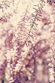 Small Pink Flowers On A Bush Branch. Spring Background.  Blooming Garden. A Branch Of A Bush With Pi poster