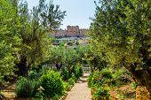 Gethsemane Garden on the Mount of Olives in Jerusalem. Magnificent well-kept garden - a symbol of th poster