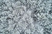 Aerial View Of A Winter Snow-covered Pine Forest. Aerial View. Aerial Photography poster