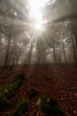 Sunrays In An Enchanted Beech Forest In Entzia, Alava poster