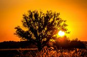 Beautiful Sunset, Warm Summer Evening On The Edge Of The Forest Are Lonely Trees, And The Sun Falls  poster