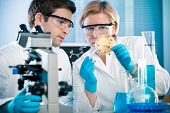 stock photo of microorganisms  - scientists analyzing germs growth on an agar plate - JPG