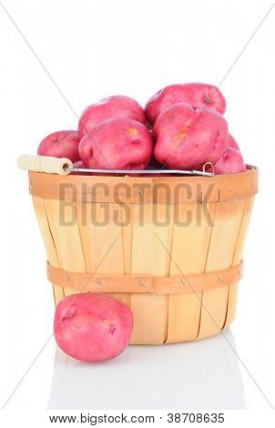 A bushel basket full of red potatoes on white background with reflection. Vertical Format
