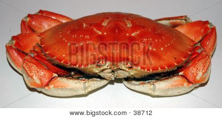 Colossal Crab
