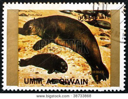 Postage stamp Umm al-Quwain 1972 Seal, Animal