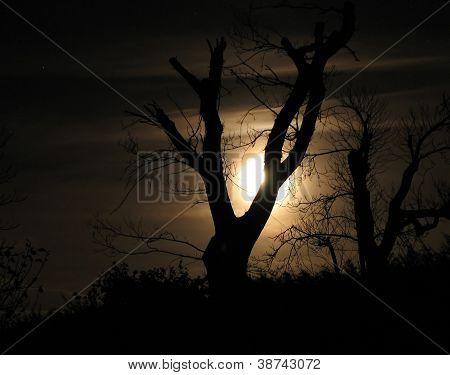 Moonlight And Tree