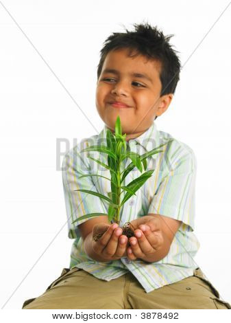 Asian Boy Holding A Green Sapling