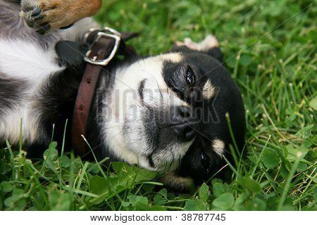 a cute puppy in the grass