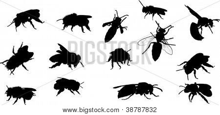 illustration with bee and wasp silhouettes isolated on white background