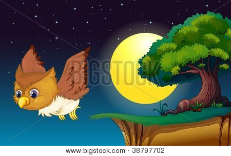 illustration of an owl in a dark night