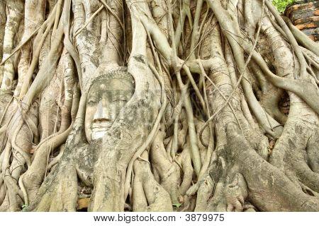 Head Of The Sandstone Buddha Image Thailand
