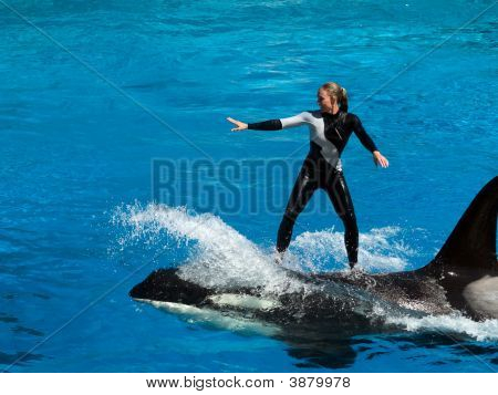 Riding On Shamu\'S Back