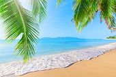 stock photo of bay leaf  - Palm and tropical beach - JPG