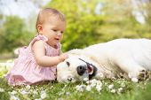 stock photo of baby dog  - Baby Girl In Summer Dress Sitting In Field Petting Family Dog - JPG