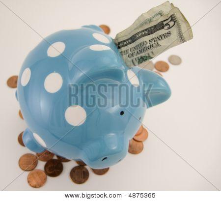 Stimulus Pig