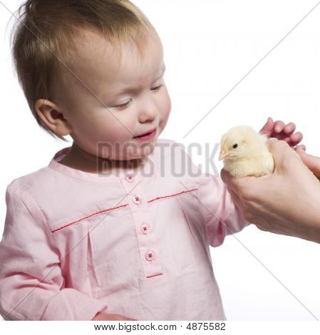 Toddler Caresses Baby Chick.