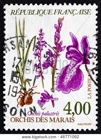 Postage Stamp France 1992 Anacamptis Palustris, Orchis Palustris